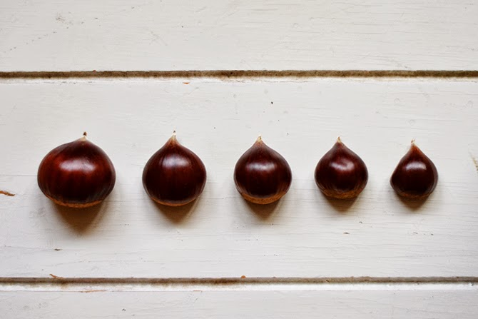 chestnuts_in_a_row.jpg