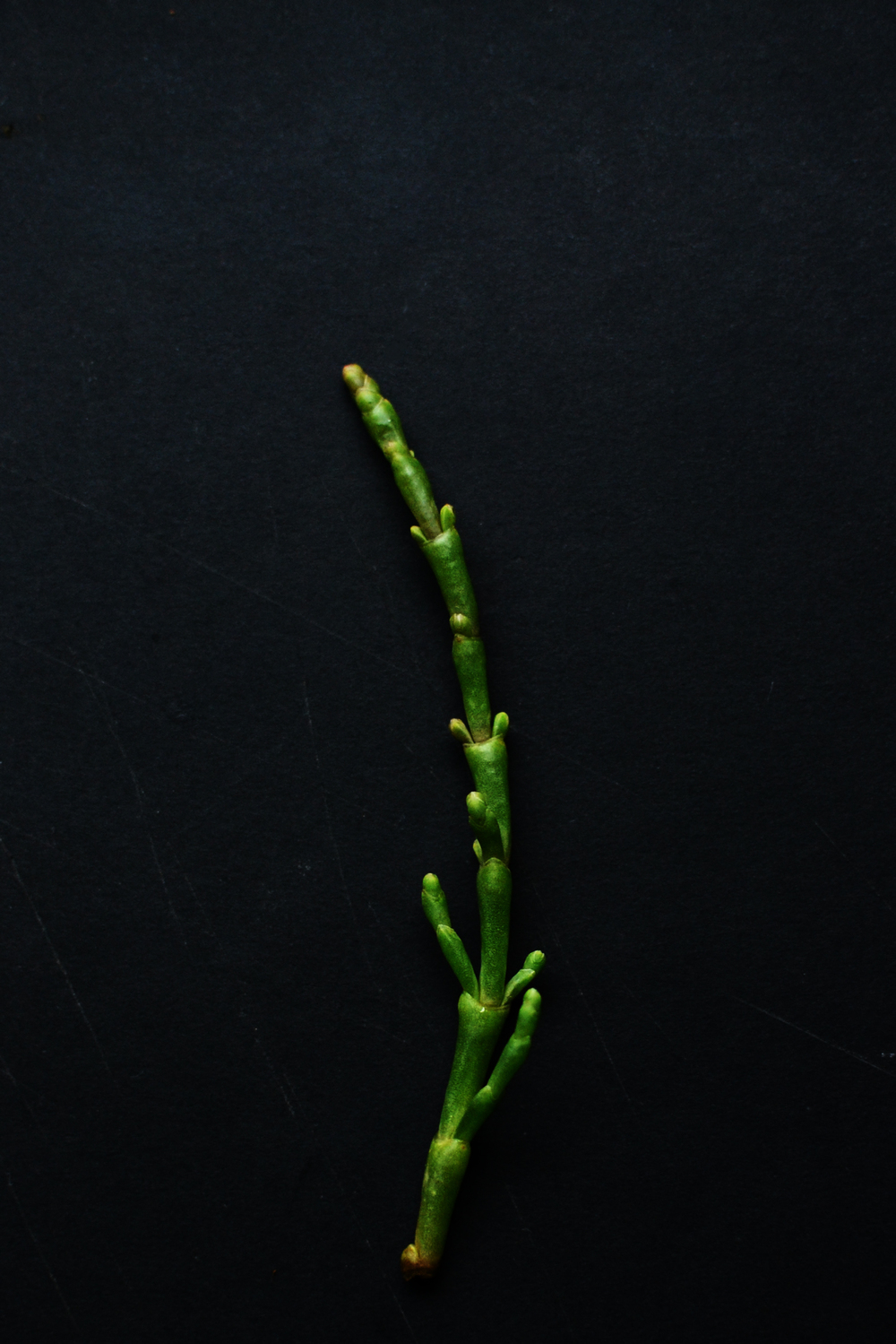 Samphire_recipe.jpg