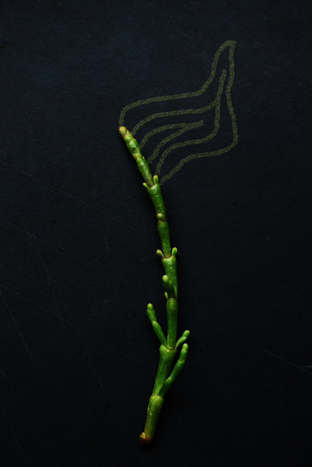 Samphire_recipe2.jpg