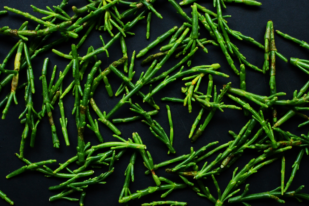 Samphire_salad_recipe.jpg