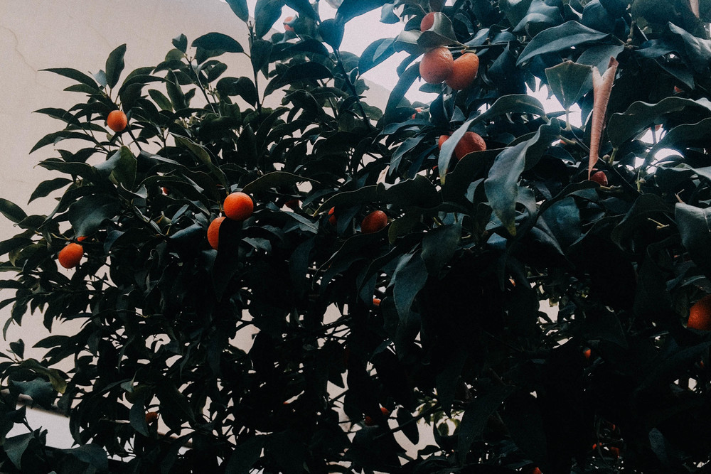 Oranges-Telaviv