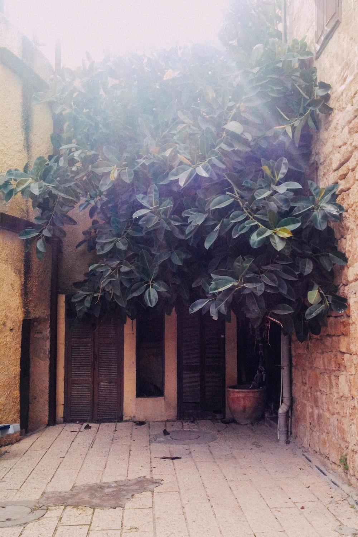 Jaffa_TelAviv_street_corner