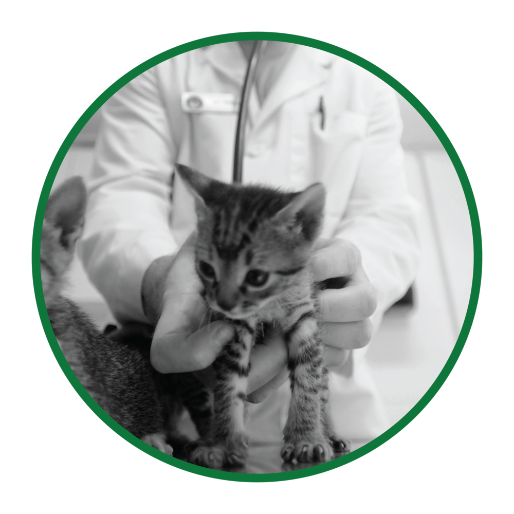 Veterinary Compounding-01.png
