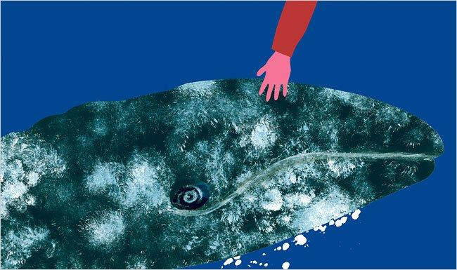 whales-650-4.jpg