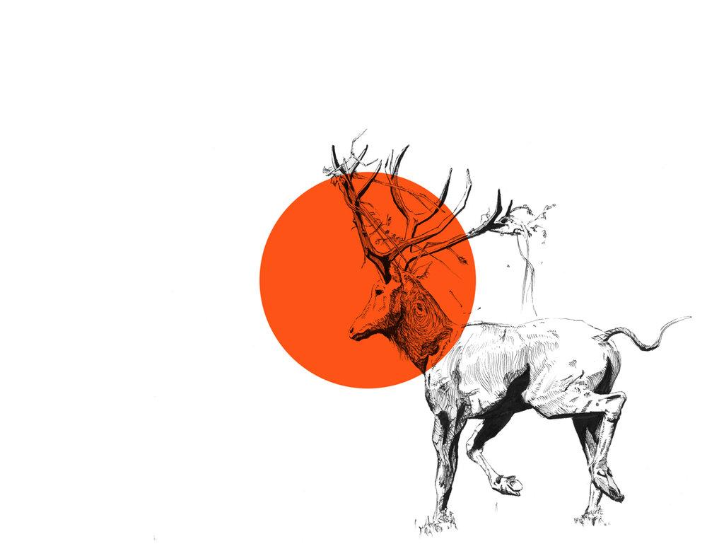Pere-Davids-Deer.jpg