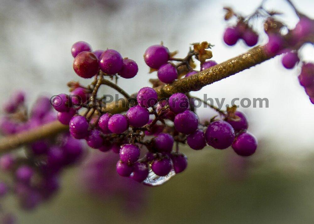 Winter Garden - Dunham