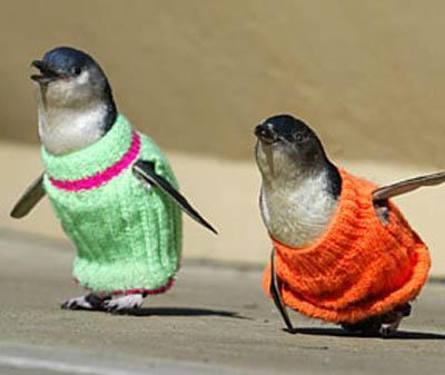 penguinsweater.jpg