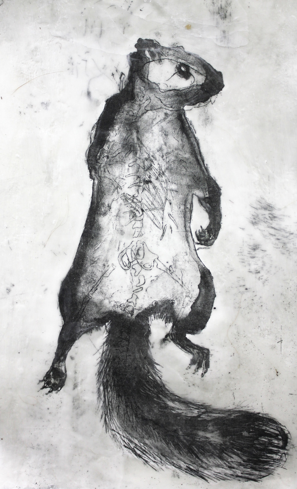 Preserved Squirrel 2014
