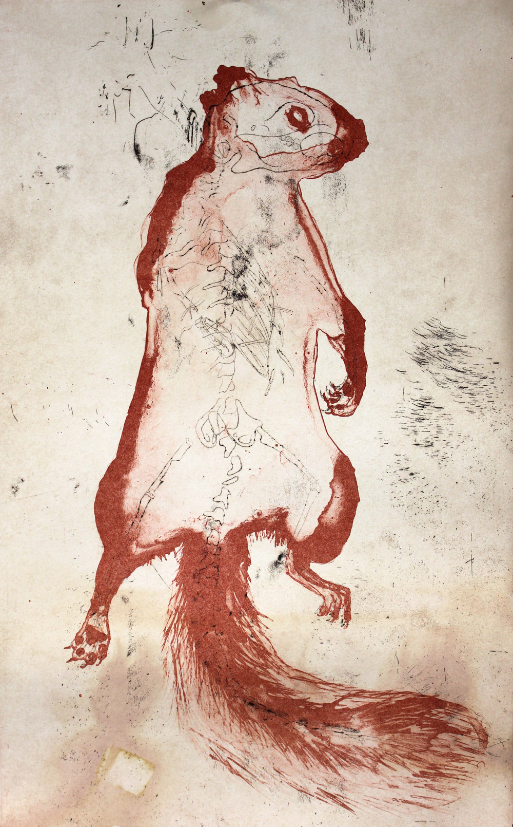 Preserved Squirrel (Red) 2014