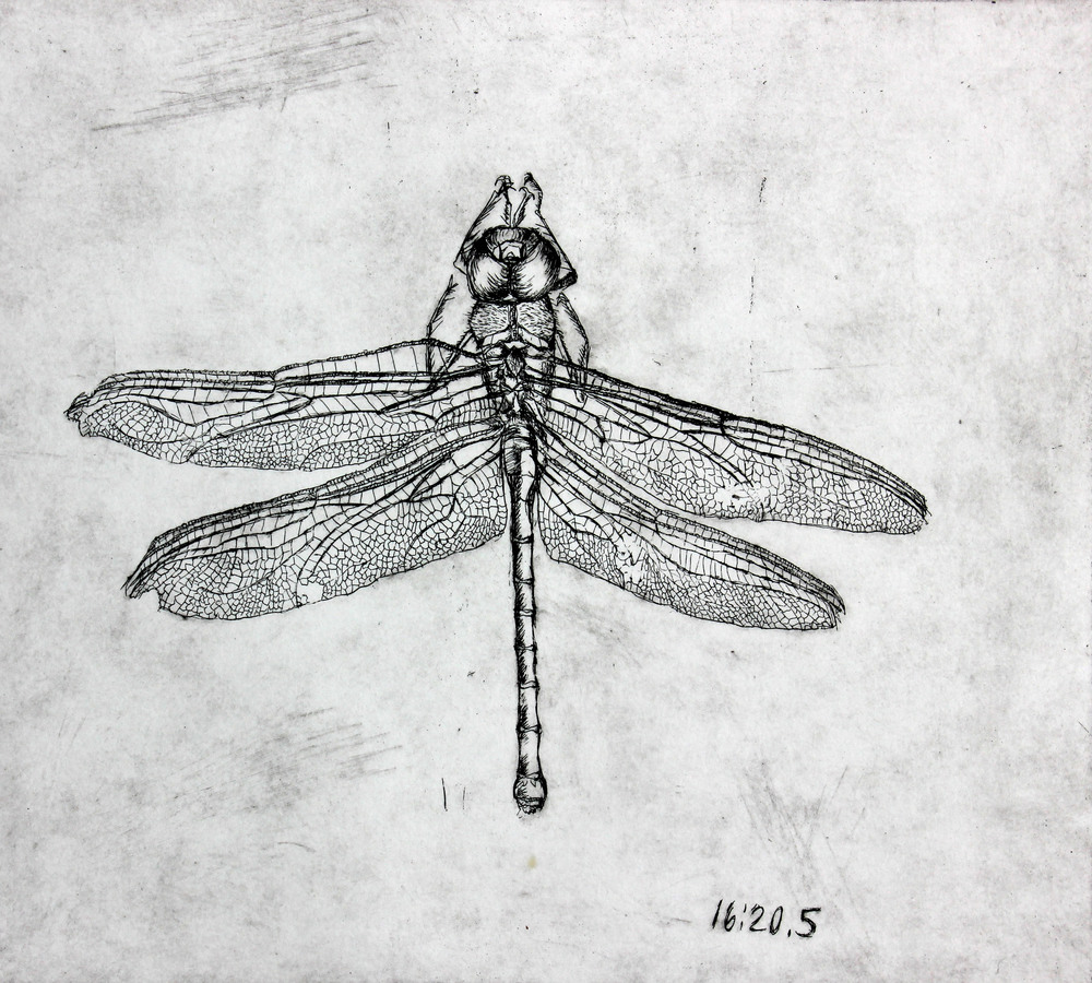 Dragonfly Study 2013