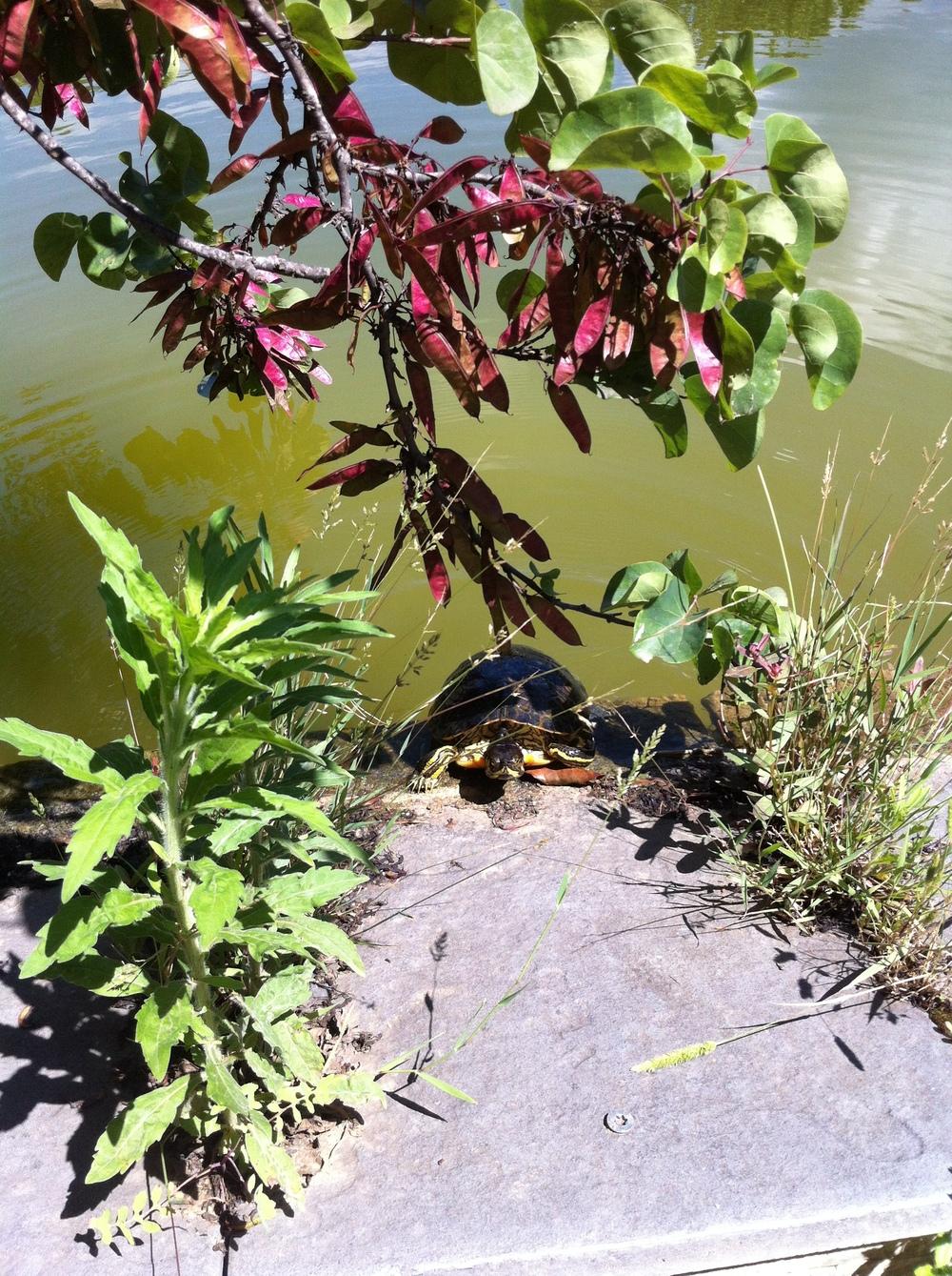 surprised turtle