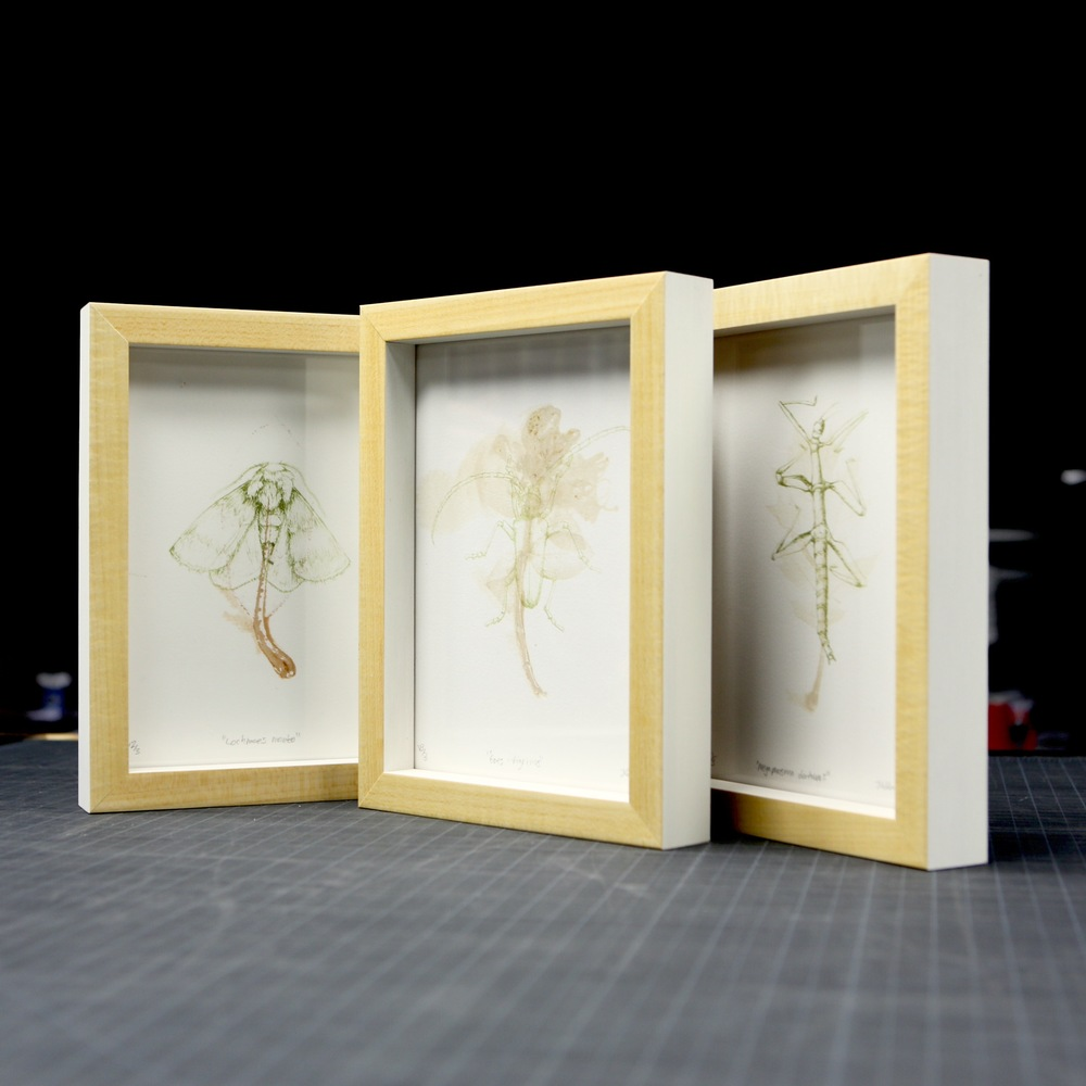 various insect studies, 2013