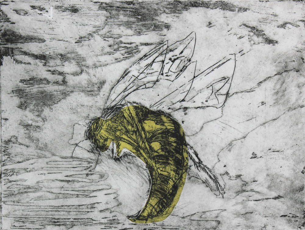 Cicada Killer Study