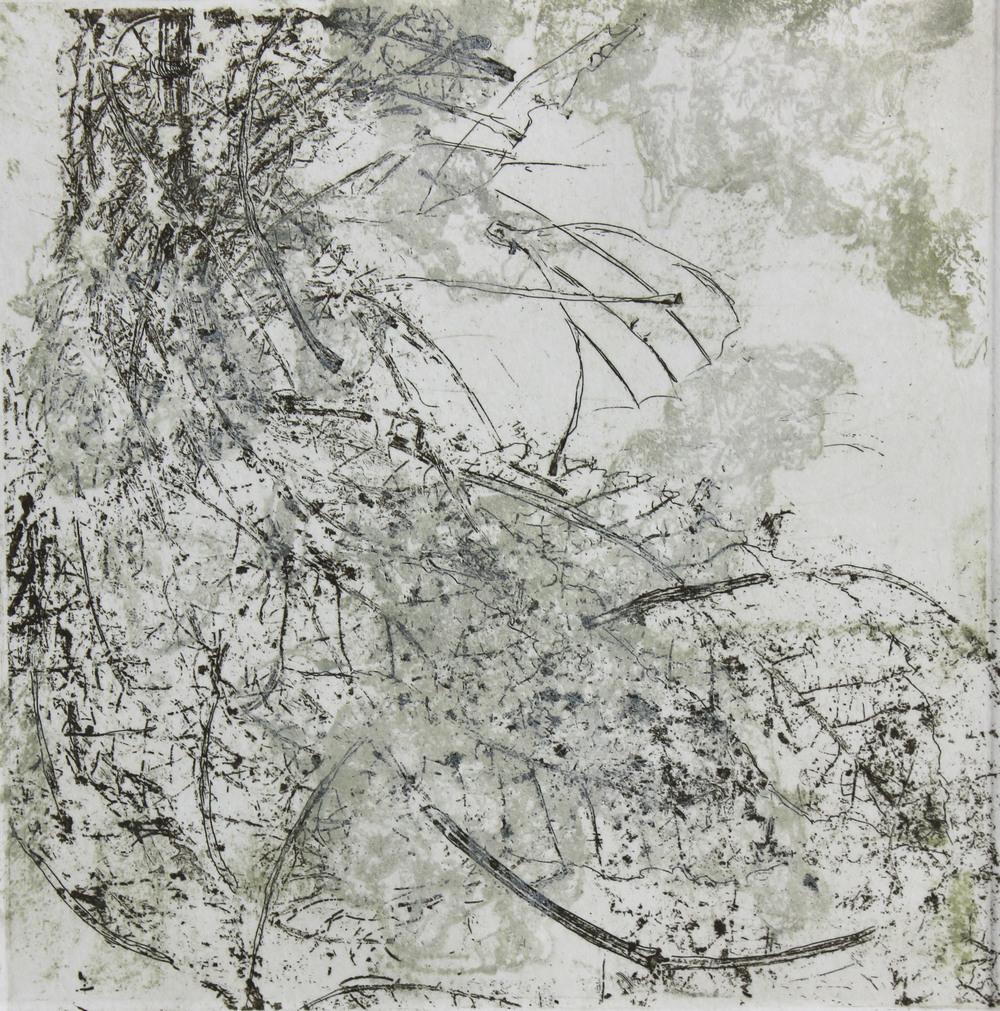 Lifecycle (worm nest)