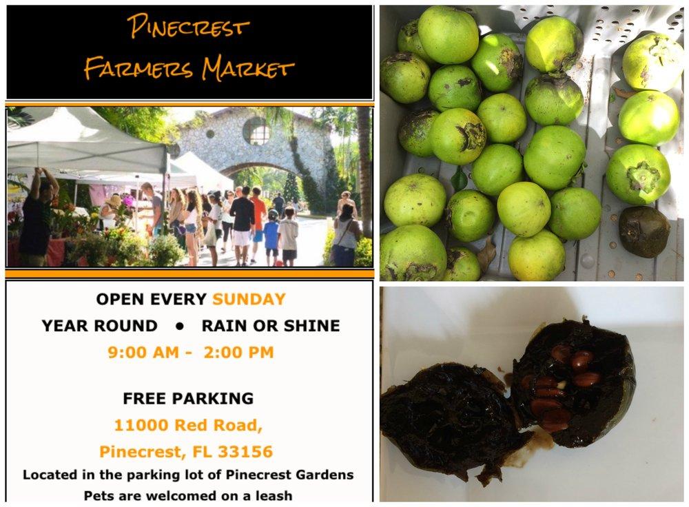 Pinecrest Farmers Market Miami Sapote