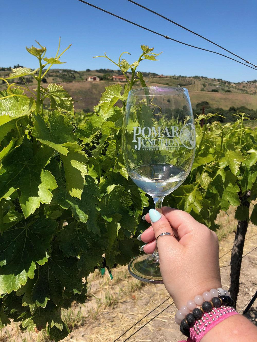 Cass Wine.jpg