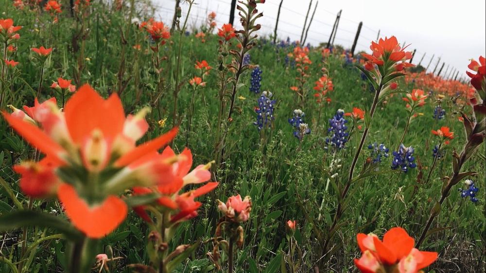 Exploring the roadside flower varieties