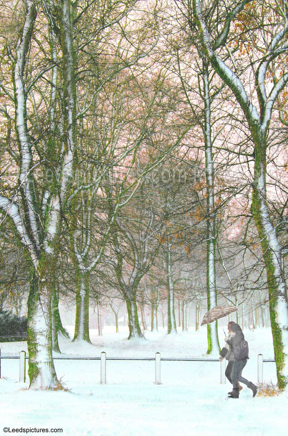 Woodhouse Moor, tall trees, snow, two walkers with umbrella    Fine snow as the sun begins to set beyond the park