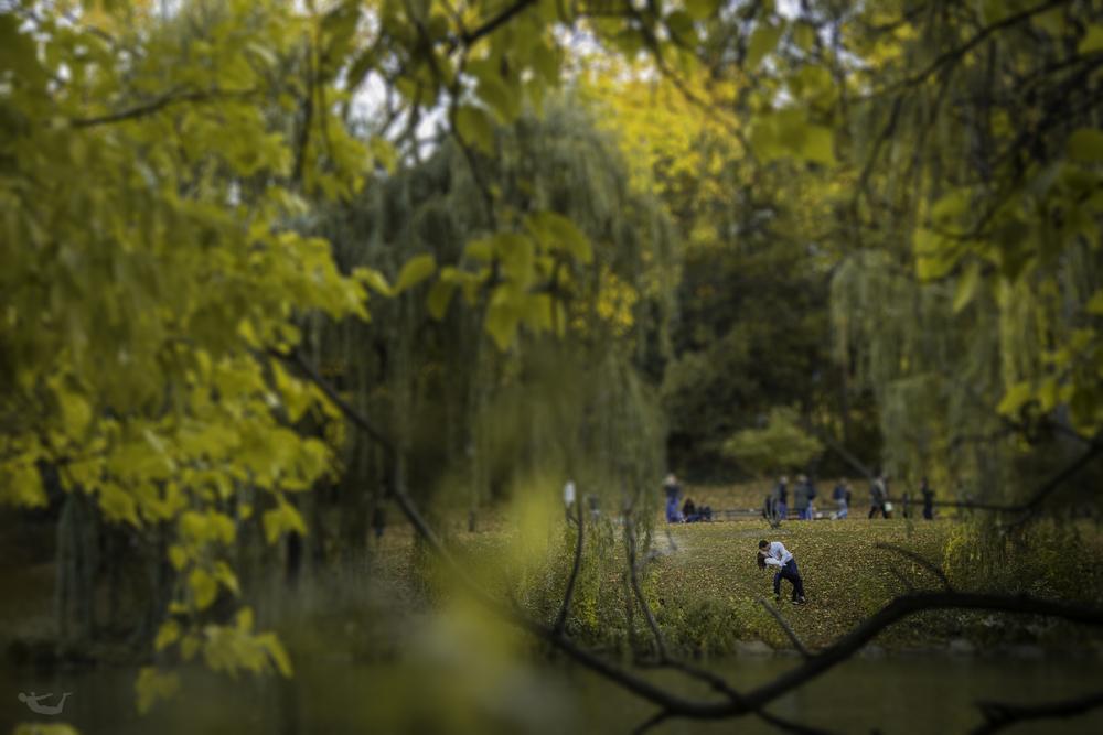 Central Park Engagement.jpg