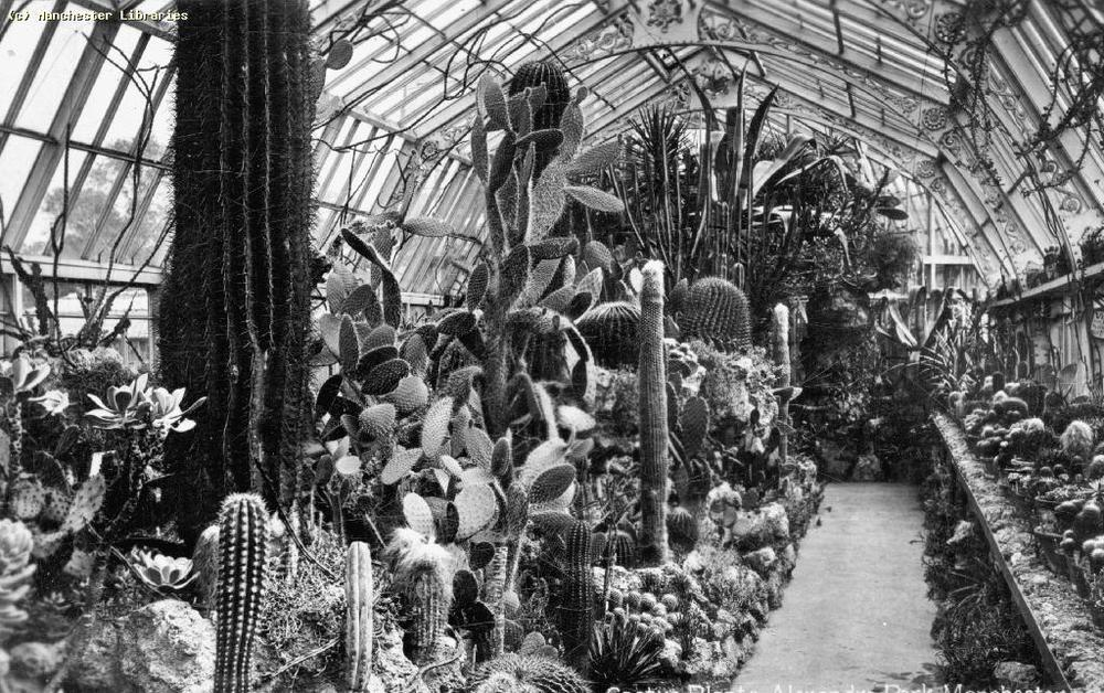 Part of this plant collection can be found today in  Wythenshawe Park .  Photo courtesy of Manchester Archive and Local Studies