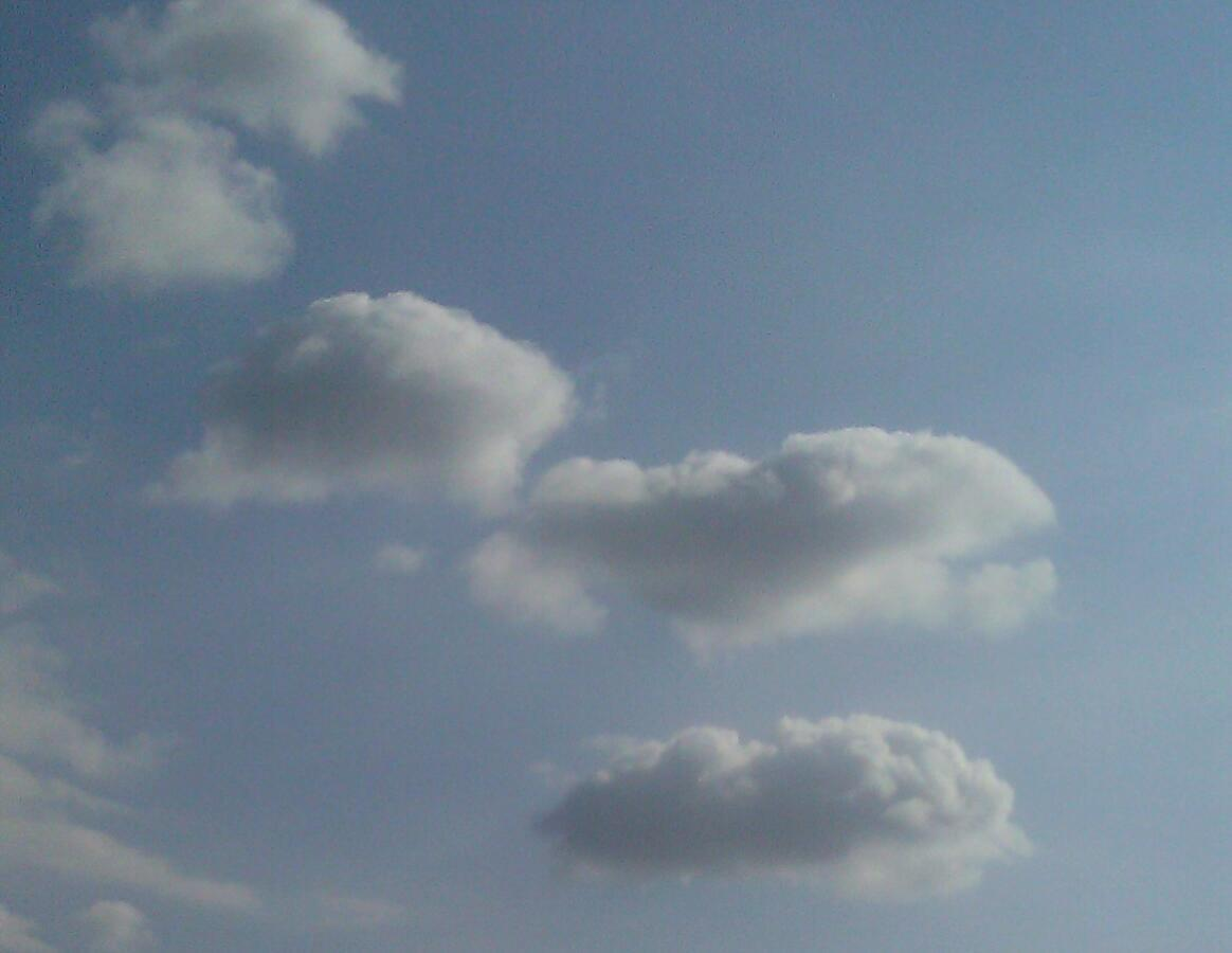 Up above my head in the Claremont skies……..I couldn't decide which face this resembles, a fish, dinosaur or whale????