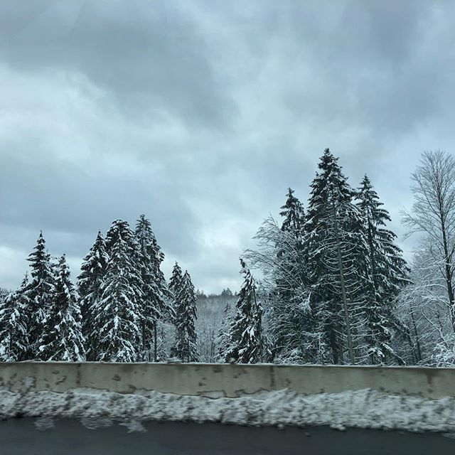 Back in the northern land of snow ❄️ and forest 🌲 🌲 🌲 #germany🇩🇪 #autobahn #winterwonderland
