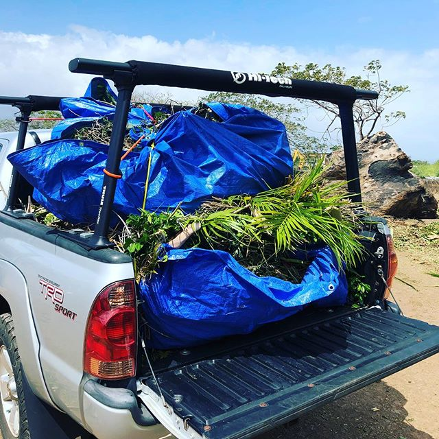 When nature calls and you gotta deal with it. Jumped off the plane and started the next day with getting my hands dirty. 😅 💪and that's not even the farm property. 🗯help. Suitcase will continue to be left unopened for a week 😄  #backtotheislands #dontleaveplantsunattended #choppingtrees #girlsgottadowhatshesgottado gottado