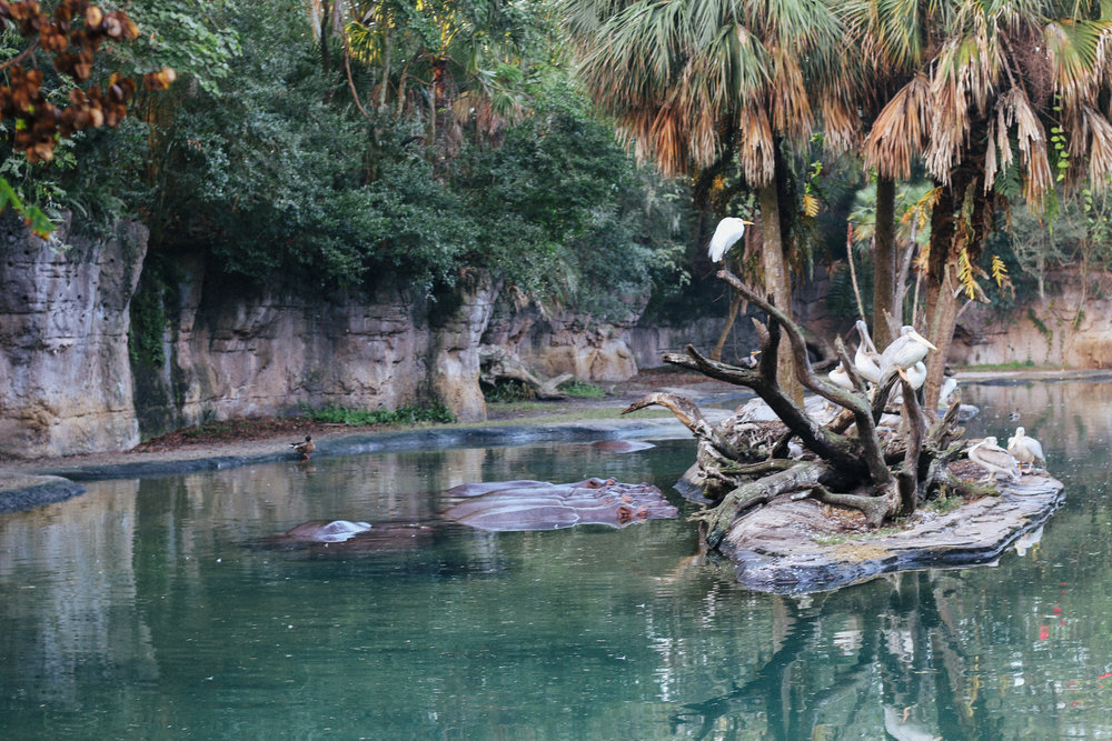 20161228_Disney Animal Kingdom_1-11.jpg