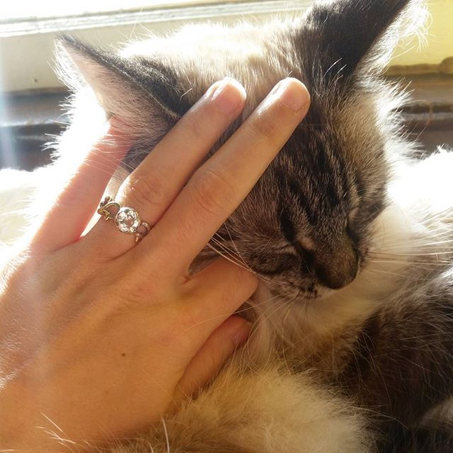There's been a lot of snuggling the past two days ❤. I'm a bit exhausted 😴 but I'll be back at it tomorrow with an incredibly special💍 I promise 😘 . . . #LivandLov #customrings #handcraftedjewelry #engagementring #snugglycat #cats_of_instagram