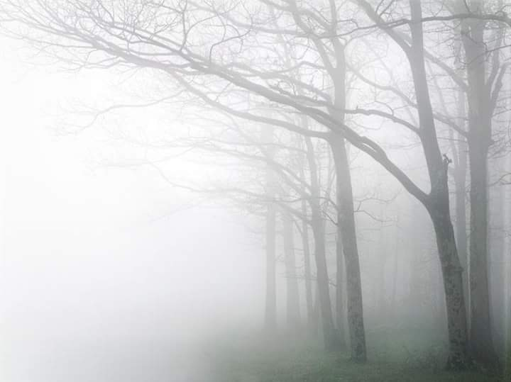 Foggy Trees.jpg