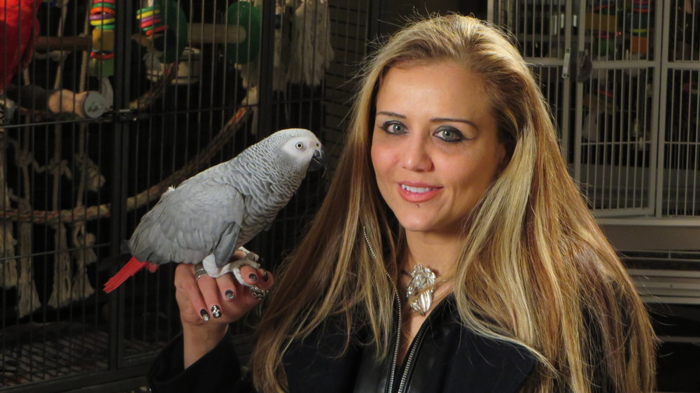 Yasmin Nakhuda, former mother to Darwin %22the ikea monkey%22, with her African grey parrot, Ontario - original.jpg