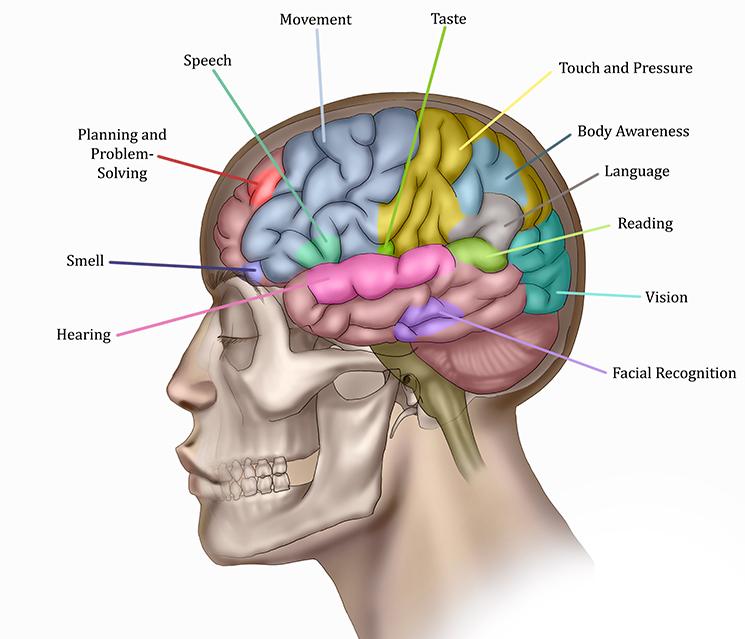 brain1_final.jpg