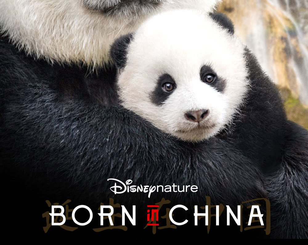 Born-In-China---School-POSTER-Square-baby-Panda-2.jpg
