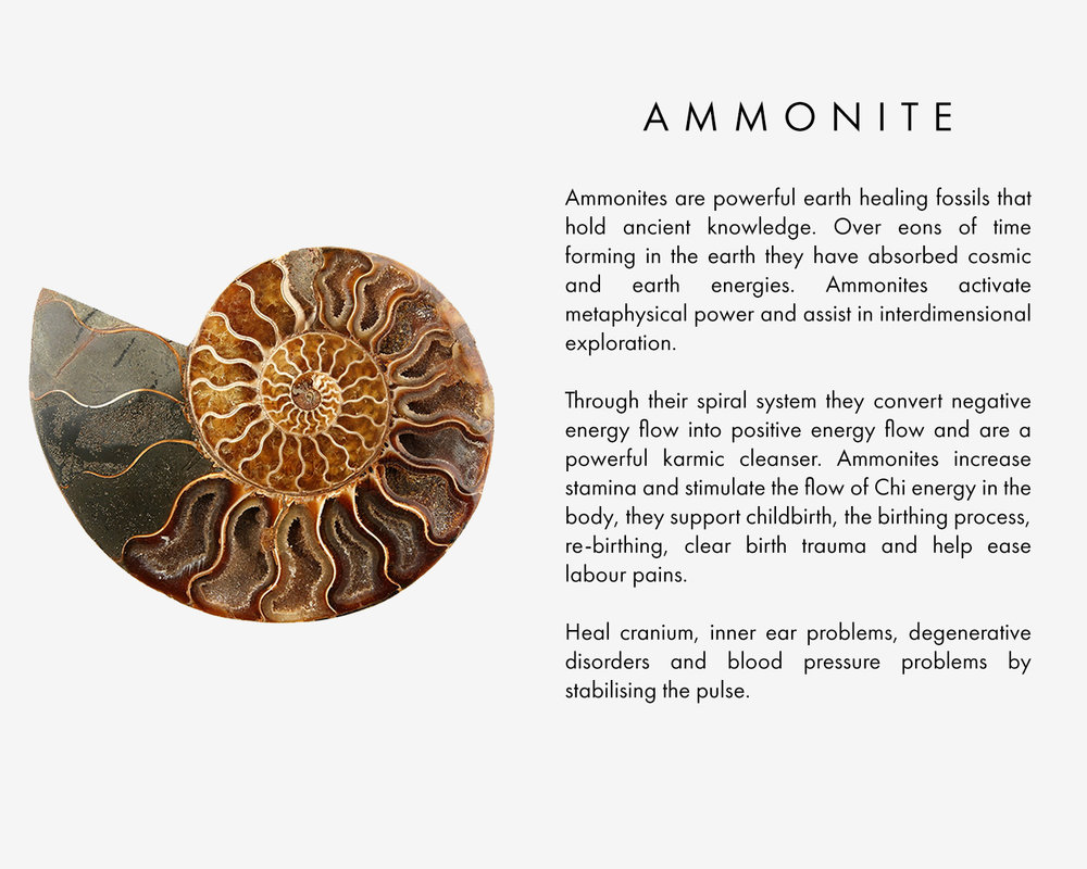 Ammonites are powerful earth healing fossils that hold ancient knowledge. Over eons of time forming in the earth they have absorbed cosmic and earth energies. Ammonites activate metaphysical power and assist in interdimensional exploration. Through their spiral system they convert negative energy flow into positive energy flow and are a powerful karmic cleanser. Ammonites increase stamina and stimulate the flow of Chi energy in the body, they support childbirth, the birthing process, re-birthing, clear birth trauma and help ease labour pains. Heal cranium, inner ear problems, degenerative disorders and blood pressure problems by stabilising the pulse.