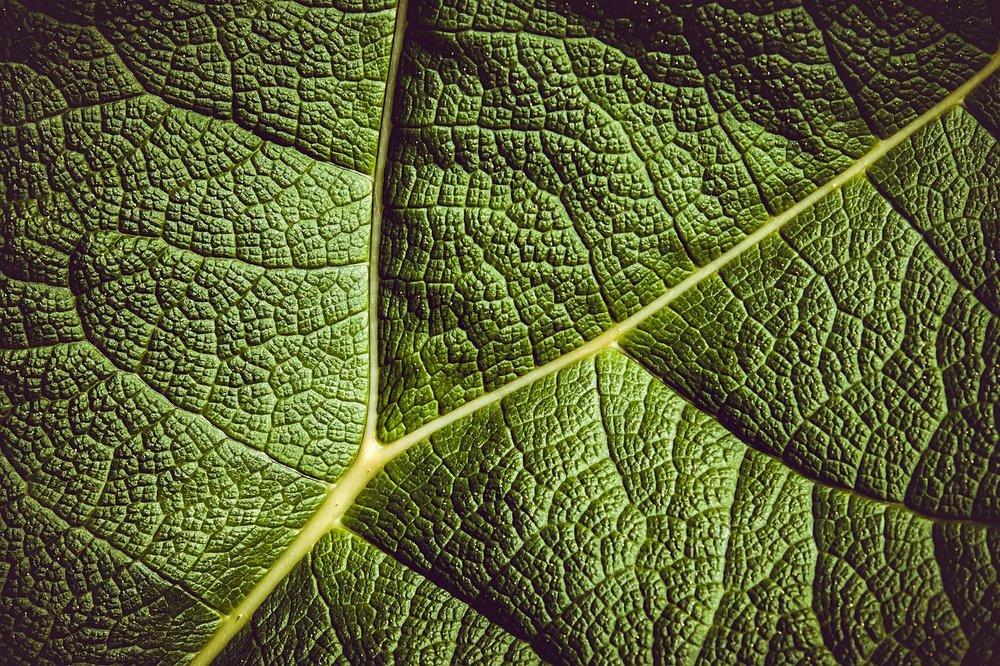 leaf-3504797_1280.jpg