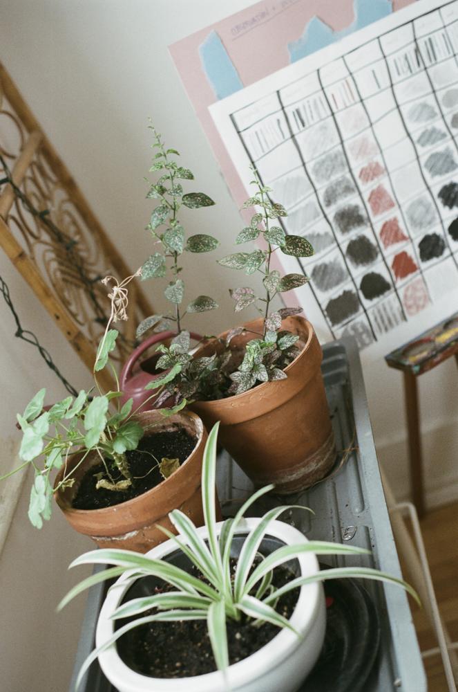 les plantes au salon