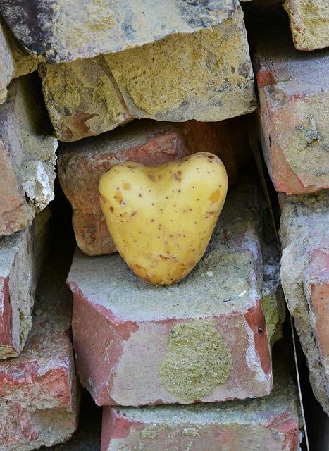 heart-1625830_640.jpg