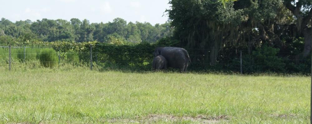 Elephant Conservation Ctr Aug 2014 020.JPG