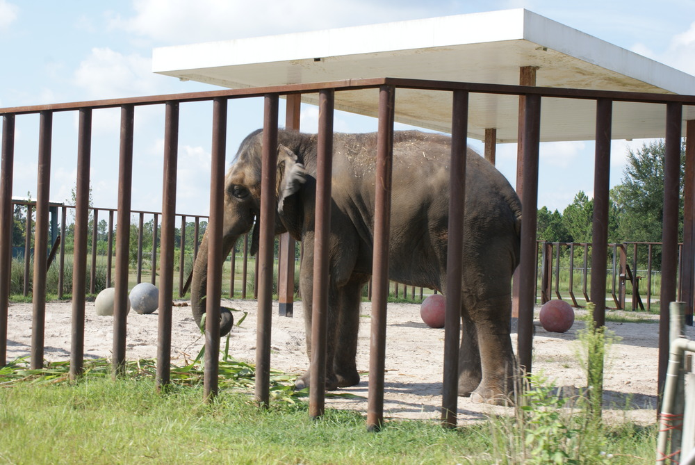 Elephant Conservation Ctr Aug 2014 032.JPG
