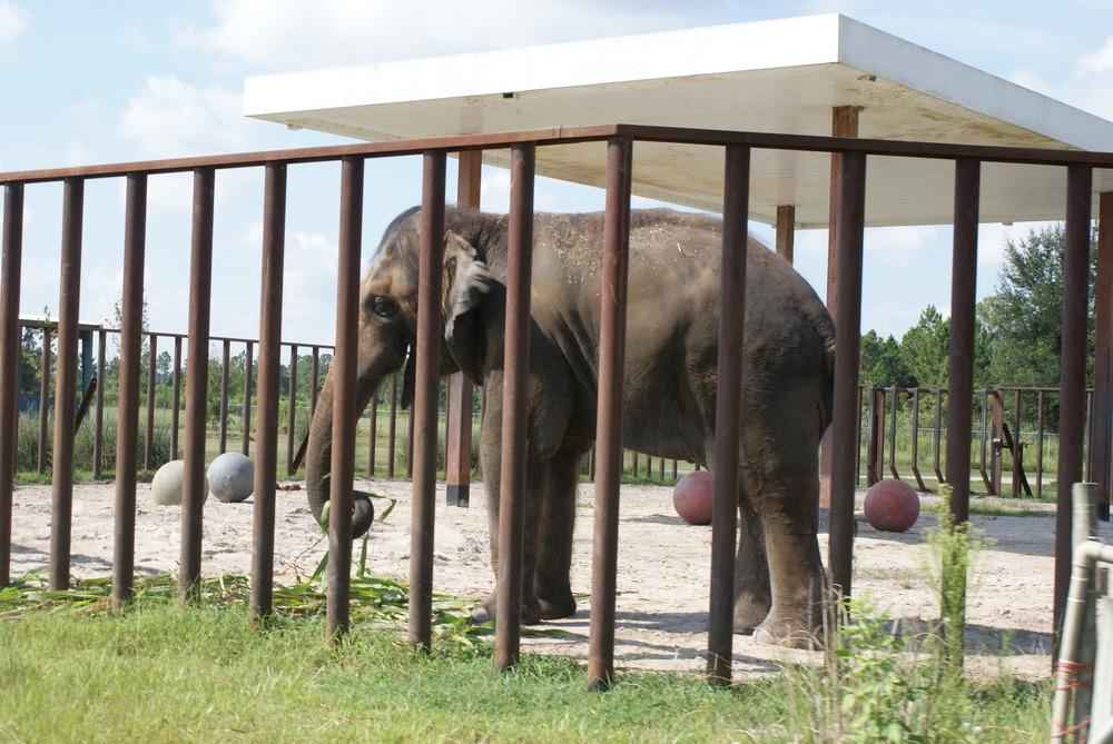 Elephant Conservation Ctr Aug 2014 032.JPG
