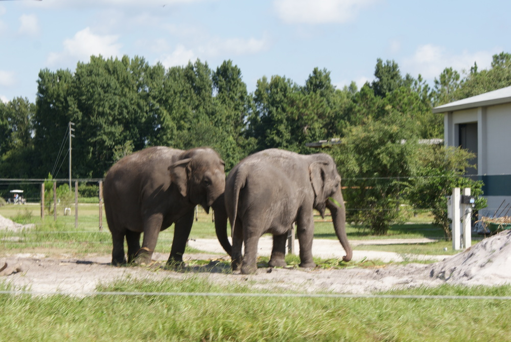 Elephant Conservation Ctr Aug 2014 037.JPG