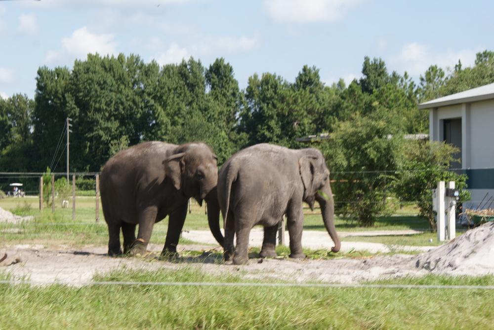 Elephant Conservation Ctr Aug 2014 037.JPG