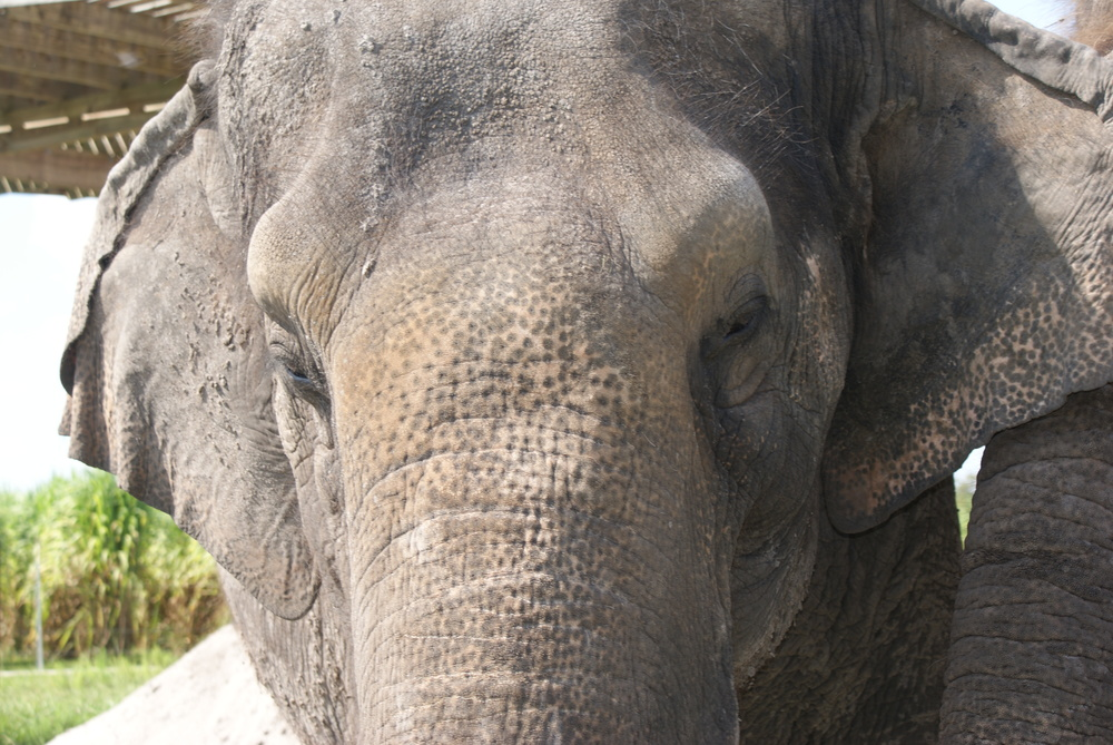 Elephant Conservation Ctr Aug 2014 039.JPG