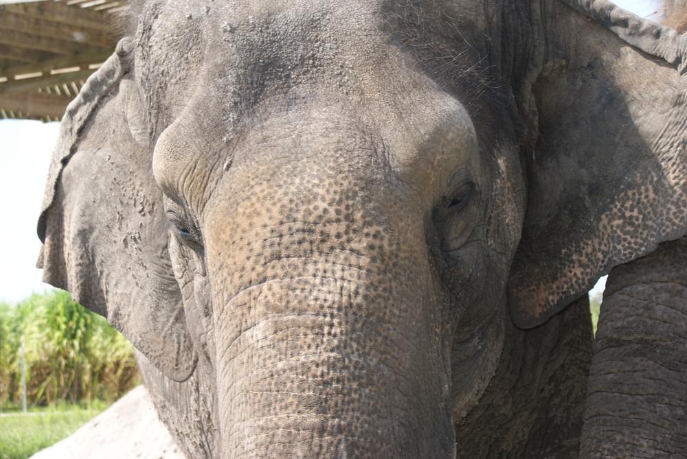 Elephant Conservation Ctr Aug 2014 039.JPG