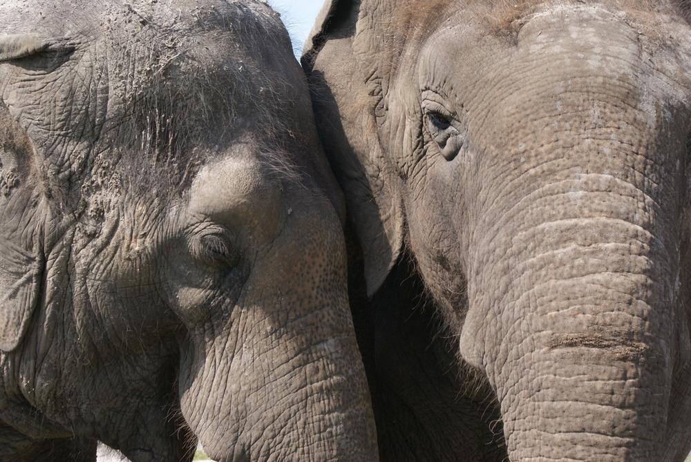 Elephant Conservation Ctr Aug 2014 040.JPG