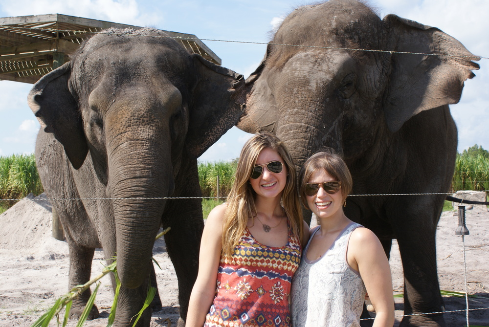 Elephant Conservation Ctr Aug 2014 047.JPG