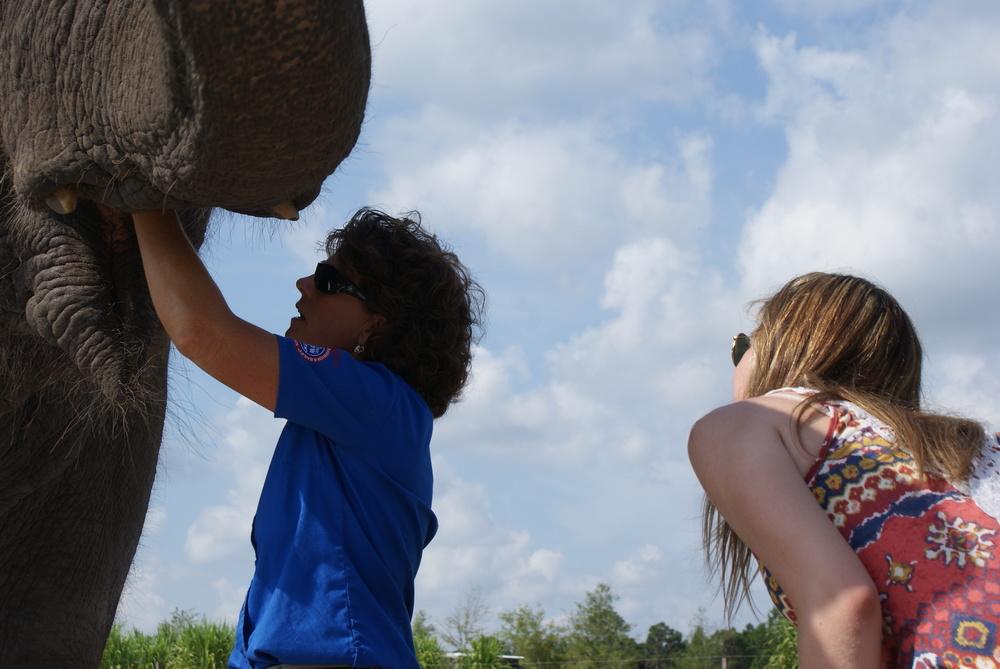 Elephant Conservation Ctr Aug 2014 079.JPG