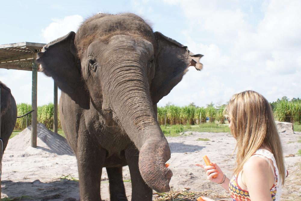 Elephant Conservation Ctr Aug 2014 088 (2).jpg