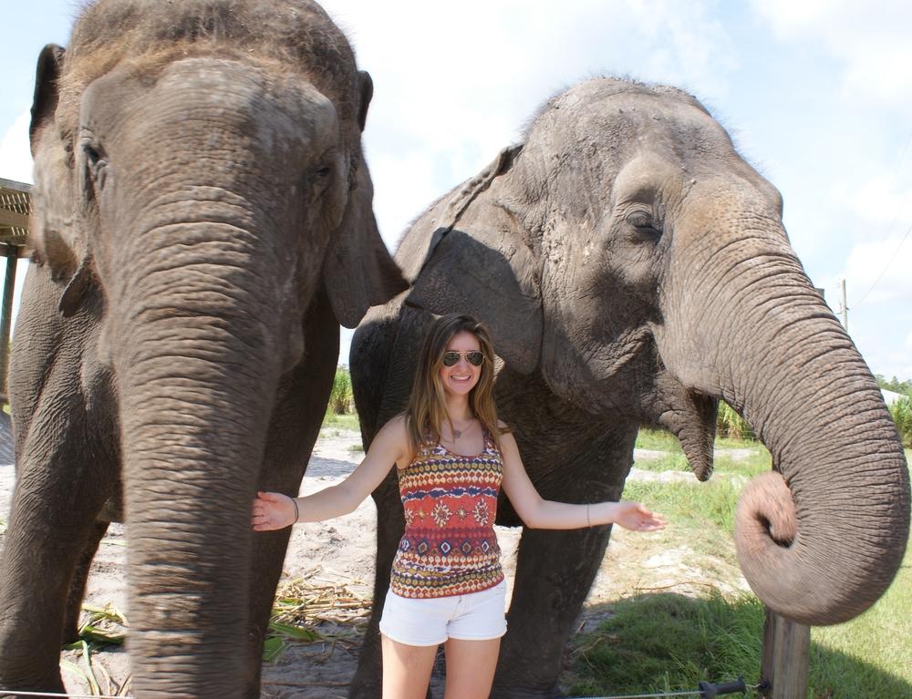 Elephant Conservation Ctr Aug 2014 113.JPG