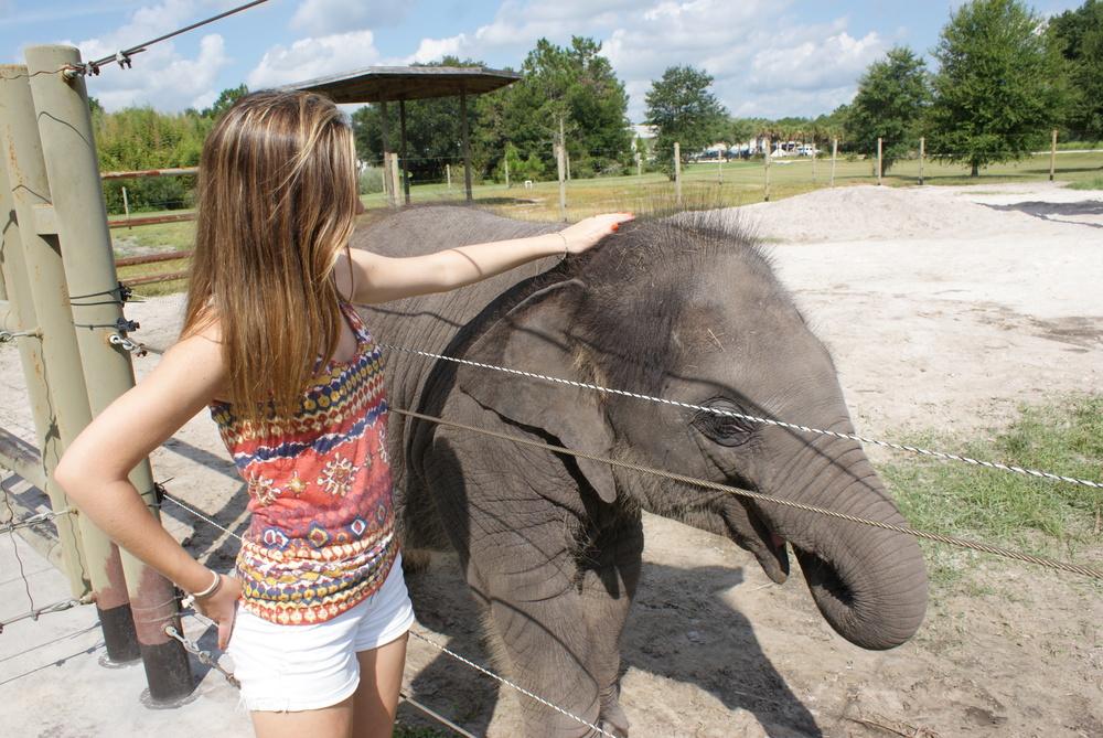 Elephant Conservation Ctr Aug 2014 140.JPG